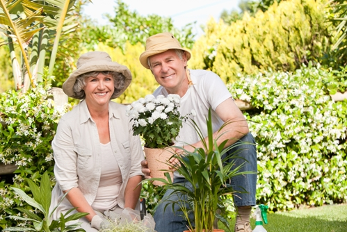 Gardening may improve your wellness and relationship with nature